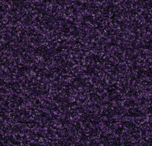 Purple Insert - Copy